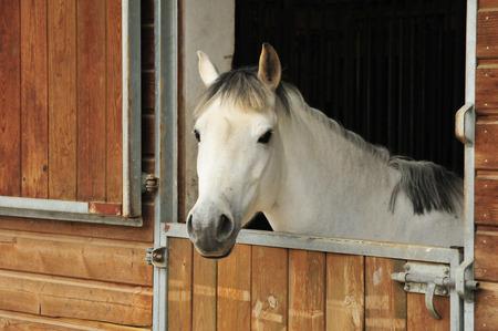 Stallboxe für Pferde